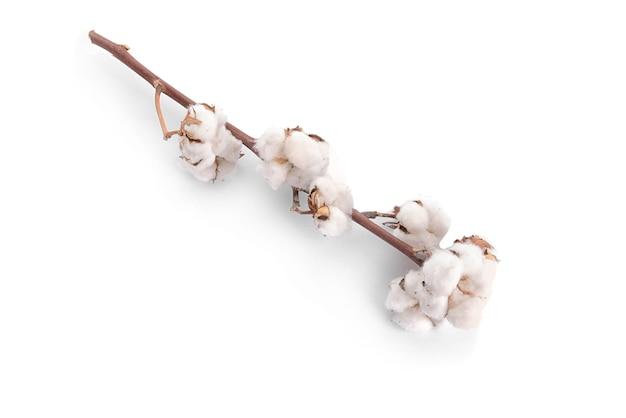 Цветы хлопка на белом