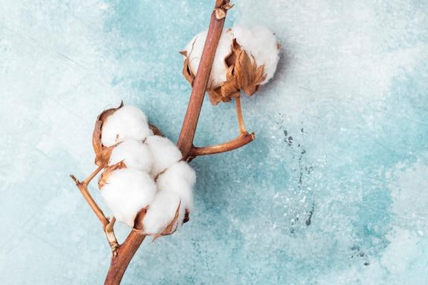 Cotton flowers on a textural background, blue. closeup. copy space