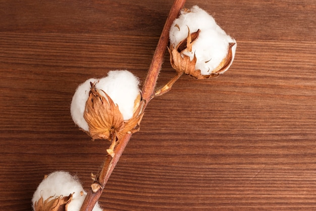 Cotton flowers on wooden background. closeup. copy space