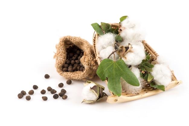Cotton or gossypium hirsutum and seeds  isolated on white