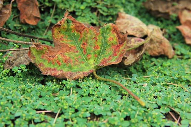 Cotton leaf