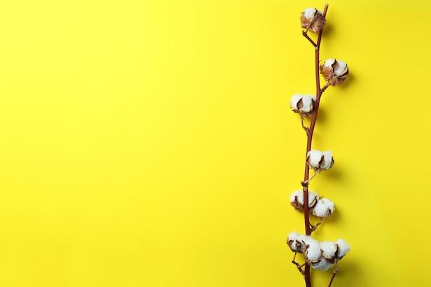 Ветвь хлопчатника на желтой поверхности