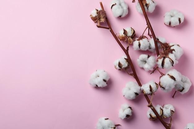 Ветви хлопчатника на розовой поверхности