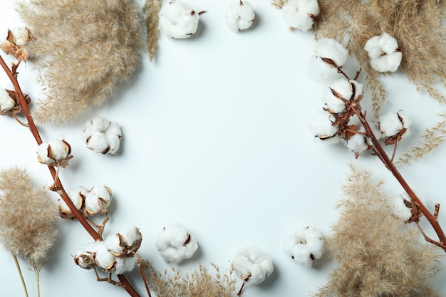 Cotton plant branches and reeds on white