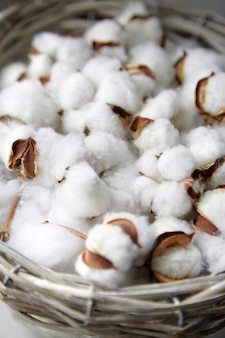 Cotton plant white fluffy flowers close up. many soft bolls in a basket