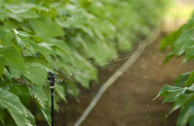 灌漑システムを備えた綿のプランテーション。