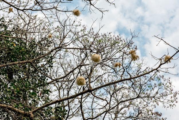 푸른 하늘에 목화 나무 배경