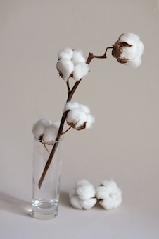 Cotton twig with white fluffy balls in the glass