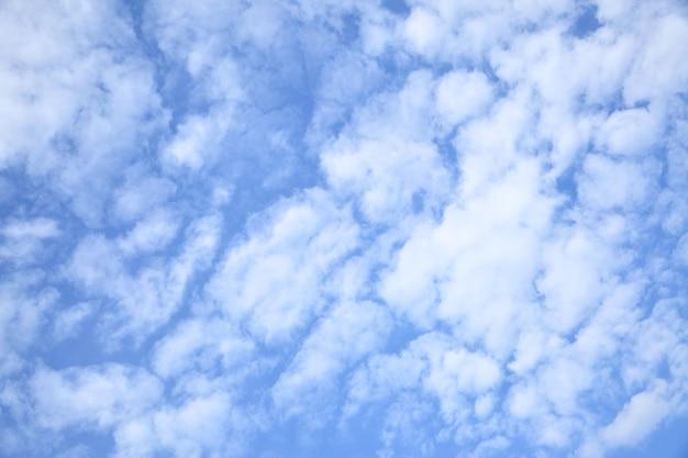 푸른 하늘의 쿠즈