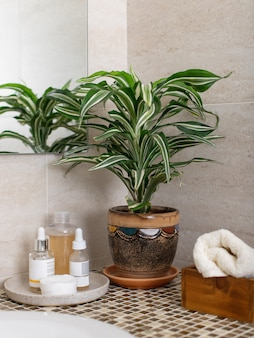 Counter in the bathroom with cosmetics for face care, roll up a clean towel and a houseplant in a flowerpot. vertical image
