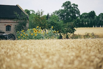 Country house with dry straw