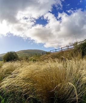 春の黄金色の背の高い野草、暗い雲とリラックスした美しい雰囲気の青い空のある田舎の風景。スペイン、ロソヤ、マドリッド。