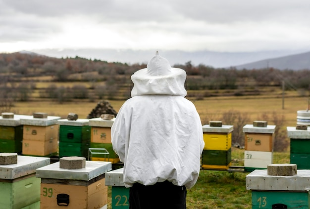 Country lifestyle concept with bee hives