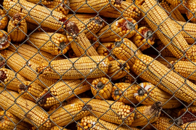 Country lifestyle with corn cobs