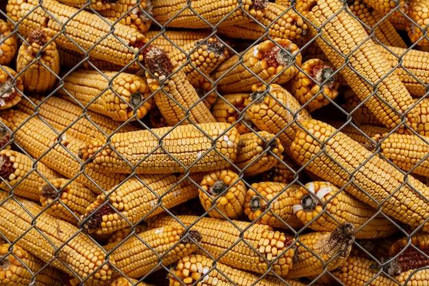 トウモロコシの穂軸のある田舎のライフスタイル