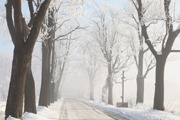 冬の朝の曇ったカエデの木々の間の田舎道