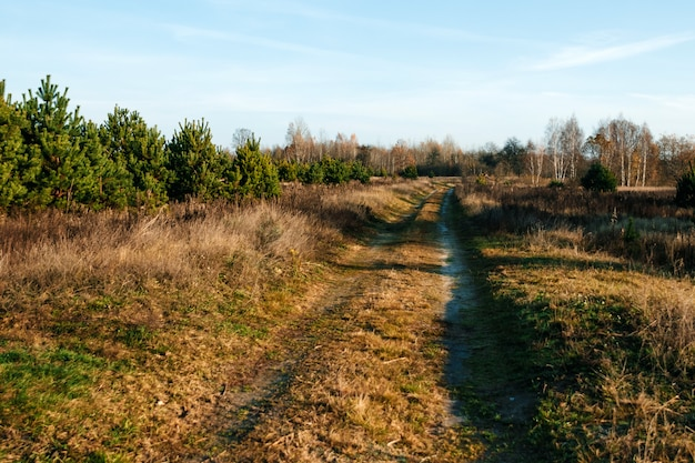 A country road in the field