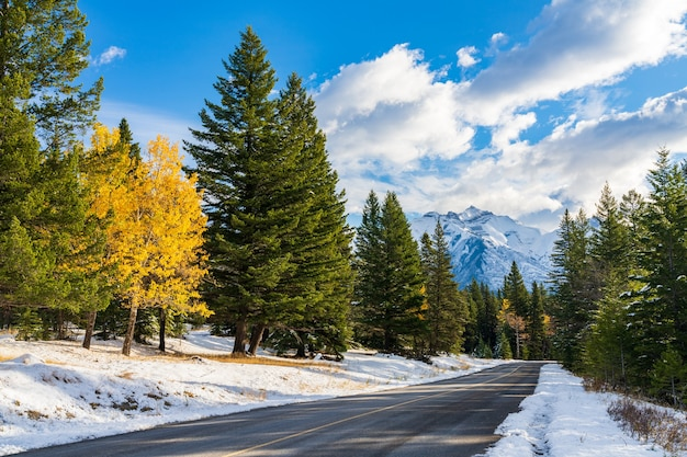 Country road in the forest in a winter sunny day morning banff national park canadian rockies