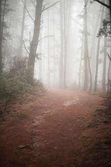 Country road in forest with fog