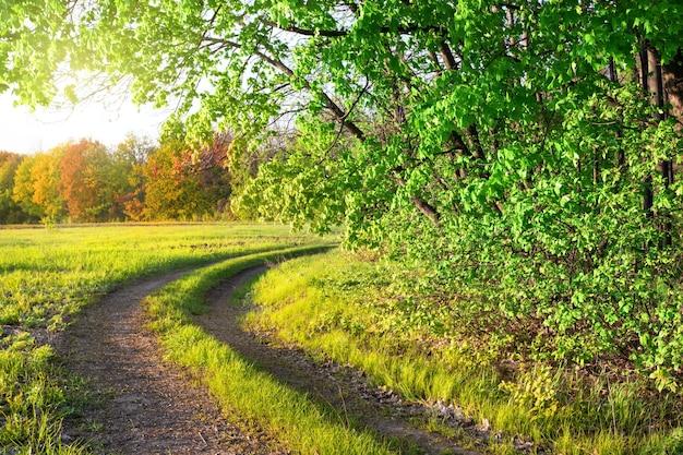 夏の公園の田舎道