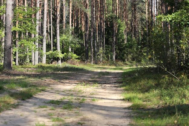 나무 배경에서 국가로
