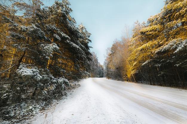 針葉樹林の田舎道は雪で覆われています。