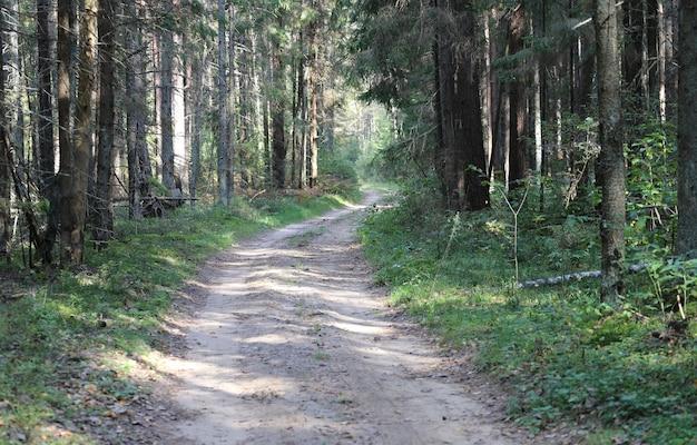 숲 배경에서 국가로