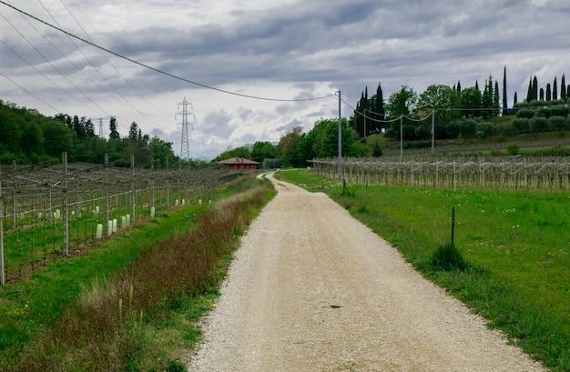 バルドリーノのワイン畑に囲まれた田舎道