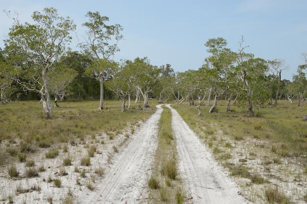 Проселочная дорога через поля дерева бумаги
