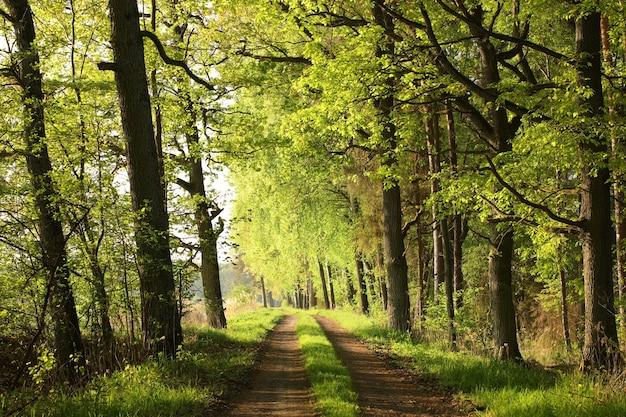 日の出の春の森を通る田舎道