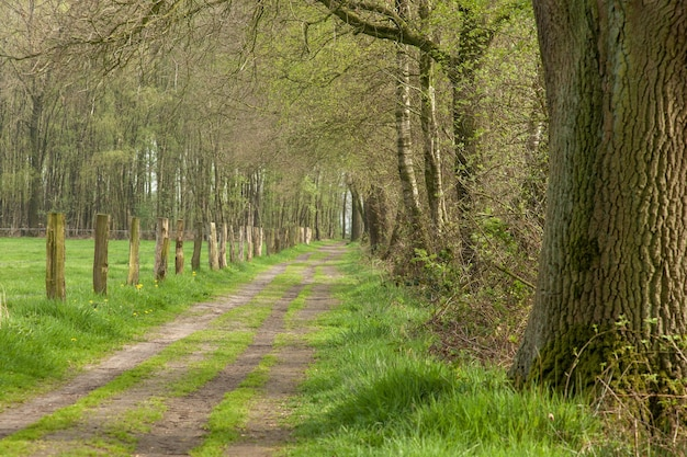 Проселочная дорога с березками в нидерландах