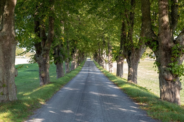 Country road with tree lined.
