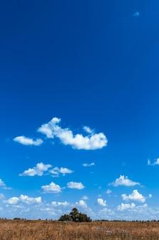 Деревенская сцена с полем против голубого неба
