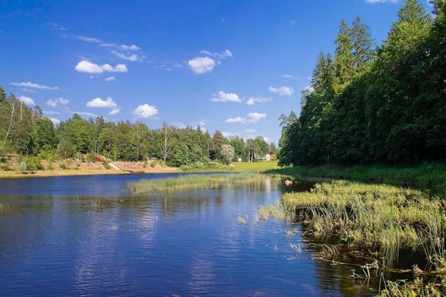 ラトビアの田園地帯と自然。川のほとりに沿った森。オーガの町。