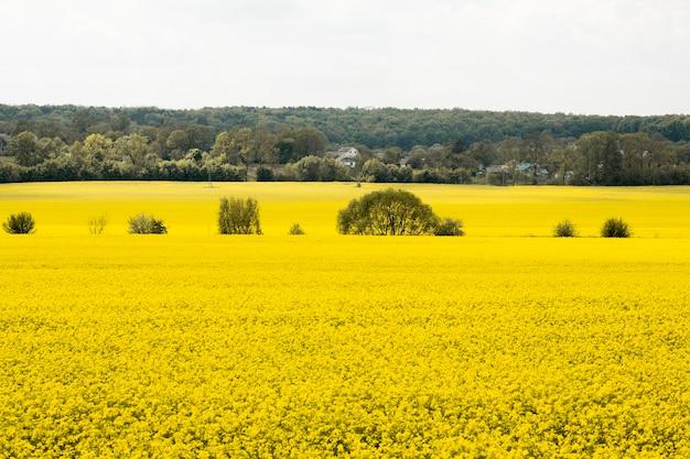Сельский пейзаж фермы