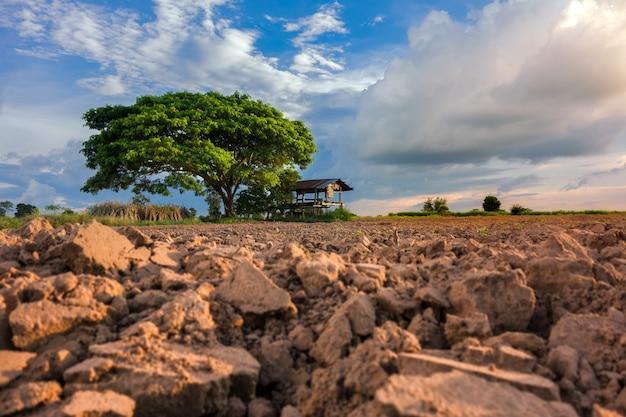 田園風景、農地、青い空。