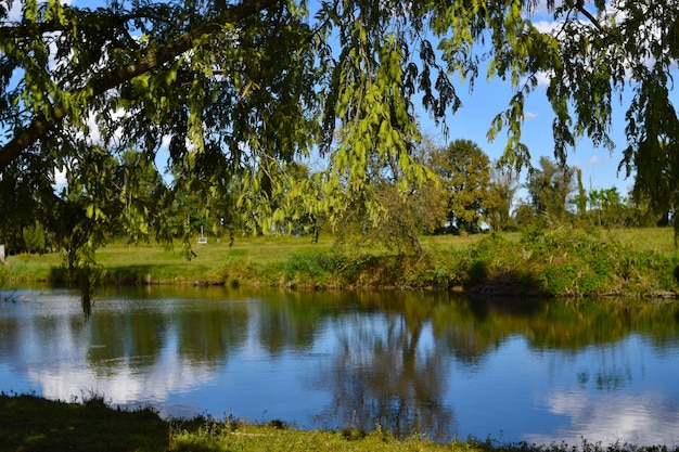 Сельский пейзаж с прудом