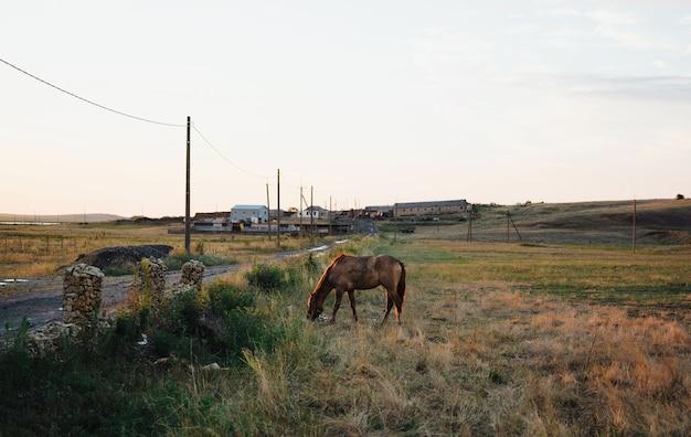 草の自然を食べるフィールドの田舎の問題の馬。高品質の写真