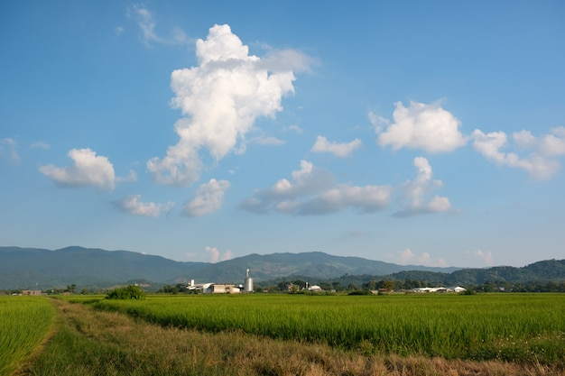 Countryside, rice fields and white clouds floating over the mountains