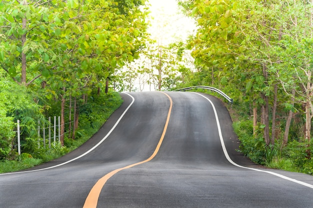 Countryside road with trees on both sides,curve of the road