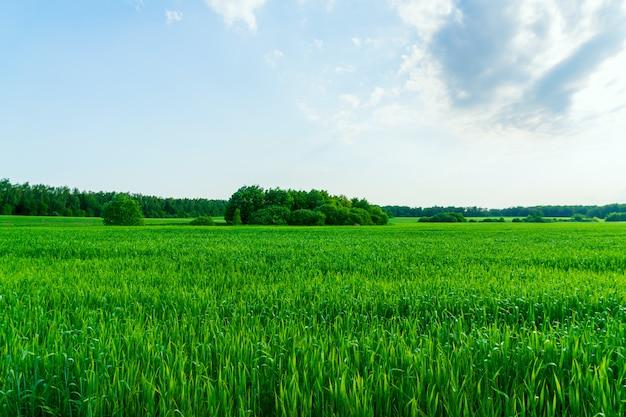 Сельский пейзаж. линия горизонта зеленых полей и лесов.