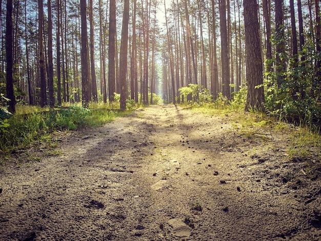 森の中の田舎道