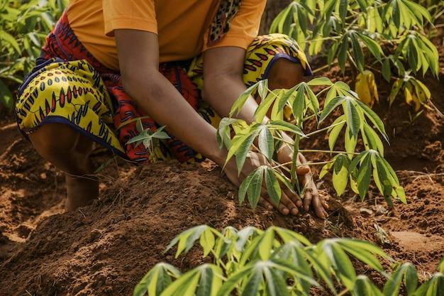 田園地帯の労働者が畑に植える