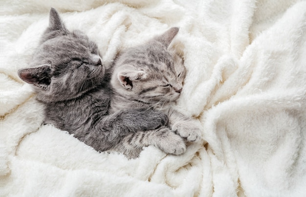 Couple of 2 kittens are sleeping embracing on white bed. hugs love 2 cats. family of purebred cats. domestic pets have comfortably tender rest. top view with copy space.
