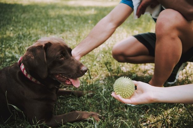 Couple of athletes with their dog in green park. chocolate labrador retriever