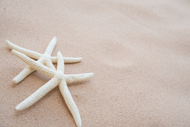 Couple of beautiful starfish on sandy beach background for summer holiday