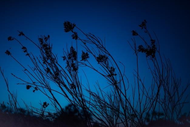진한 파란색 밤 하늘 배경에 초원 꽃의 몇 가지