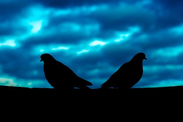 Couple breakup concept with silhouette of quarreling pigeons