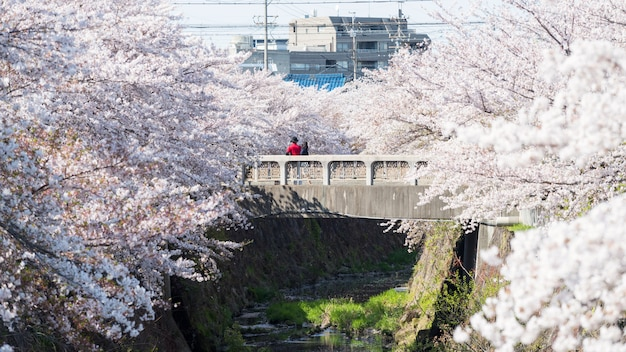 Couple on bridge with cherry blossom, nagoya