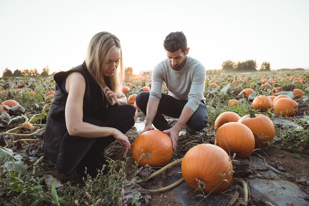 Couple checking pumpkin